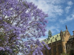 sandstone university building with jacaranda