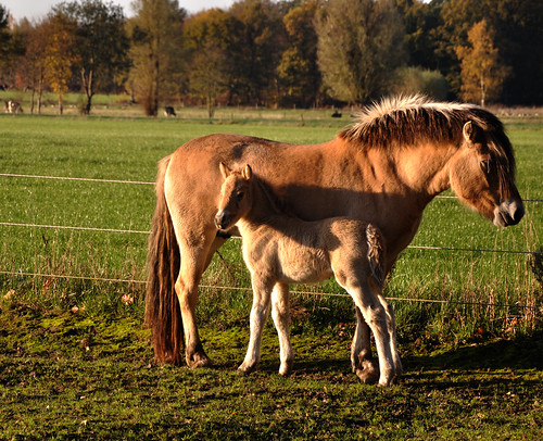 Merrie en veulen in de zon - Mare and foal in the sun