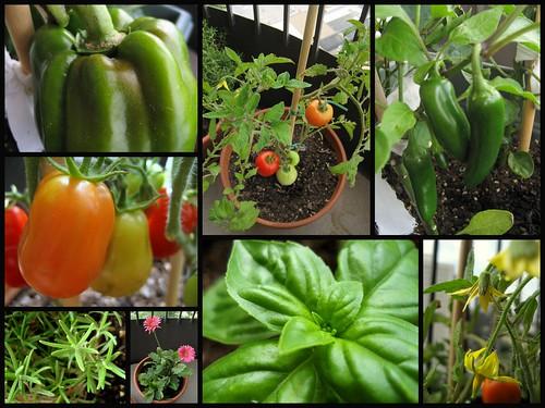 garden update  - july 27