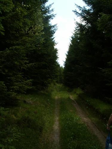 Vogtland heimlich dämmernder Wald, dort lehnen sie, mit Strahlen hell umflossen vom Mondlicht, wie von ihrer Liebe Glück, und selig still, fest Hand in Hand geschlossen, scheint ihnen, stumm versenkend Blick in Blick, Der Strom der Zeit versiegend abgeflossen und grau in Nebel sinkt der Raum zurück 287