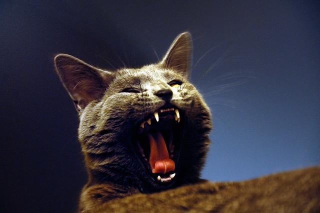 Yawned .... Douce