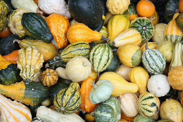 beautiful gourds