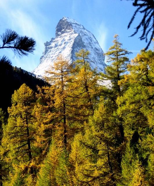 Matterhorn and Yellow Pines, Switzerland