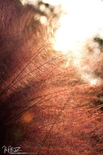 grass sunrise dof bokeh 2875 tamron2875mmf28