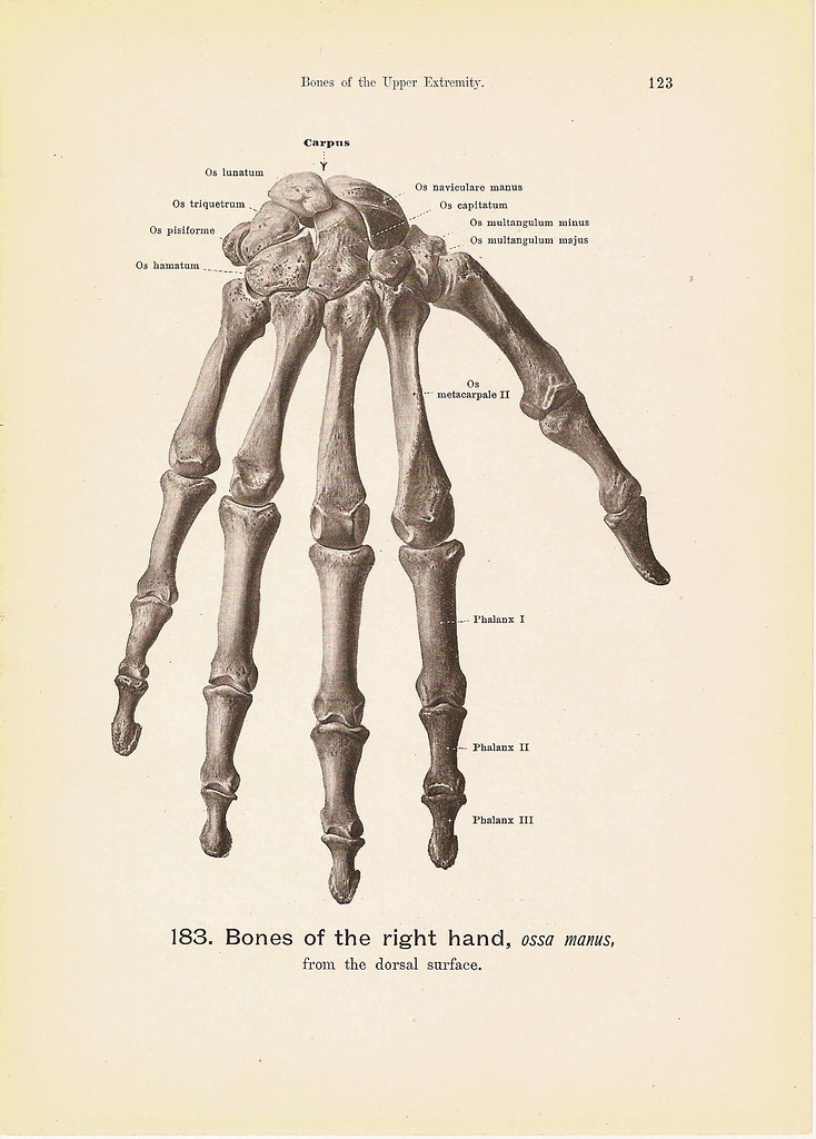 BONES of the Right Hand Engraving Anatomy Book Plate Print No. 183 ...