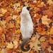 Un gato en otoño by vega*