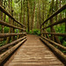 Bridge to Terabithia Rope Bridge to Terabithia