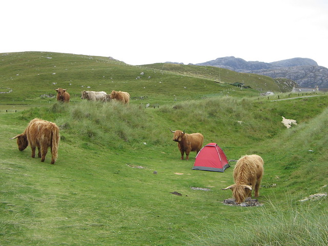 Wild camping in Scotland with Highland Cows   Flickr ...