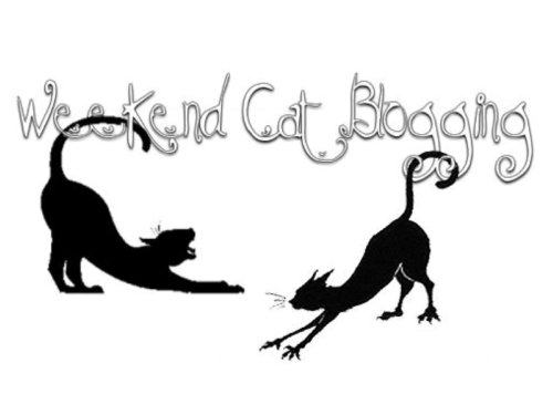 Happy 7th Anniversary Weekend Cat Blogging! Come join the party!