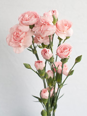 carnation(0.0), blossom(0.0), branch(0.0), flower arranging(1.0), garden roses(1.0), cut flowers(1.0), flower(1.0), artificial flower(1.0), floral design(1.0), plant(1.0), flora(1.0), flower bouquet(1.0), floristry(1.0), peony(1.0), pink(1.0), petal(1.0),