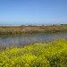 Guadalupe-Slough-to-Stevens-Creek-2011-06-18