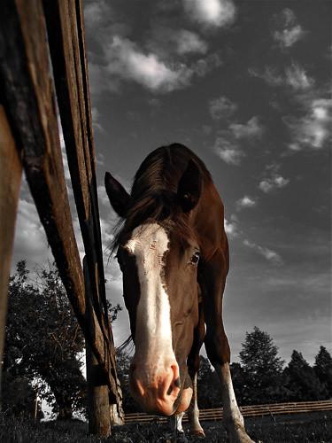 sky horse cloud toronto ontario canada art nature animal digitalart bluesky explore northamerica geo geotag markham lowangle hazara olympusevolte500 mywinners abigfave theunforgettablepictures olympuszuikodigital40150mm olympuszuikodigital14145mm lowanglewormeyeview
