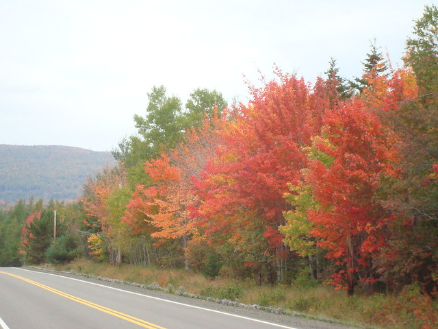 Route 19 South West Margaree