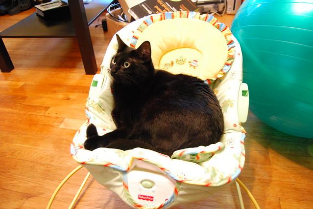 Ebony's new seat