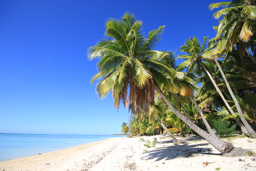White Sand Beach Palm Tree White Sand Beach Fringed by