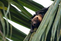 monkey(0.0), primate(0.0), animal(1.0), fauna(1.0), close-up(1.0), bat(1.0), wildlife(1.0),