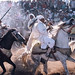 Tissa Horse Festival