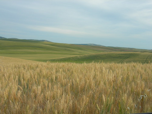 Eastern Washington Wheat Fields