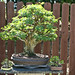 Bonsai Garden Tours