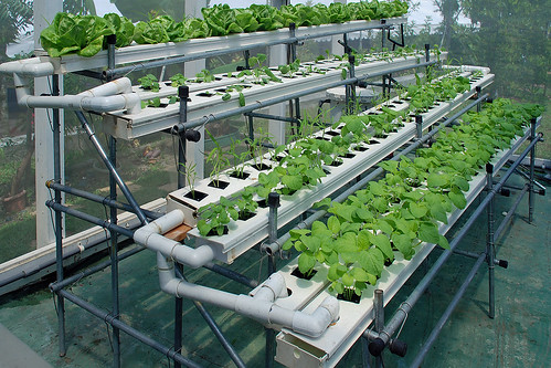 Homemade Hydroponics System Is Easy For Your Home Garden