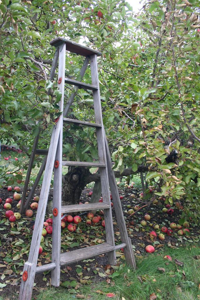 orchard ladder | ashleytoo | Flickr