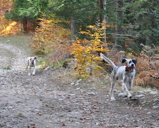 Les chiens des deux chasseurs