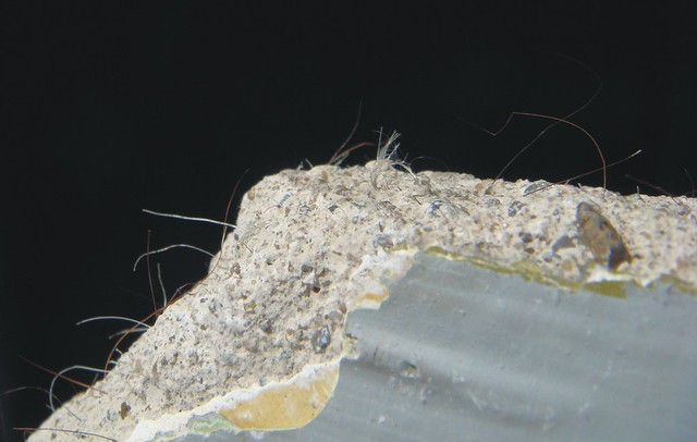 Can You See Asbestos Fibers : Asbestos plaster flickr photo sharing