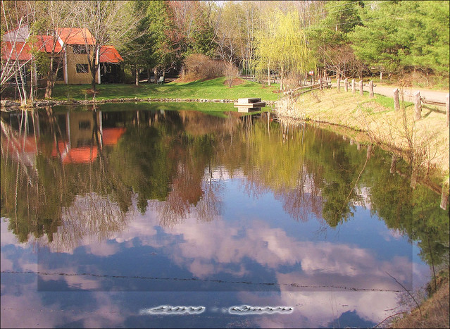 springs reflection