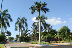 Wailea Golf Vistas Homes