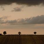 Greywell Field