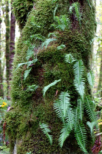 ferns on a trunk    MG 6513
