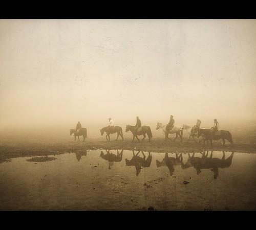 horses horse reflection texture monochrome fog textures romania transylvania riders ponytrekking