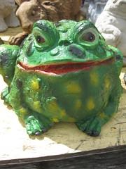 animal, amphibian, toad, frog, green, fauna, bullfrog,