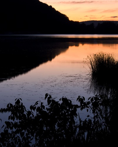 park pink blue sunset plants lake ny newyork reflection water silhouette state allegheny