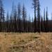 Angora Fire Survey Site J