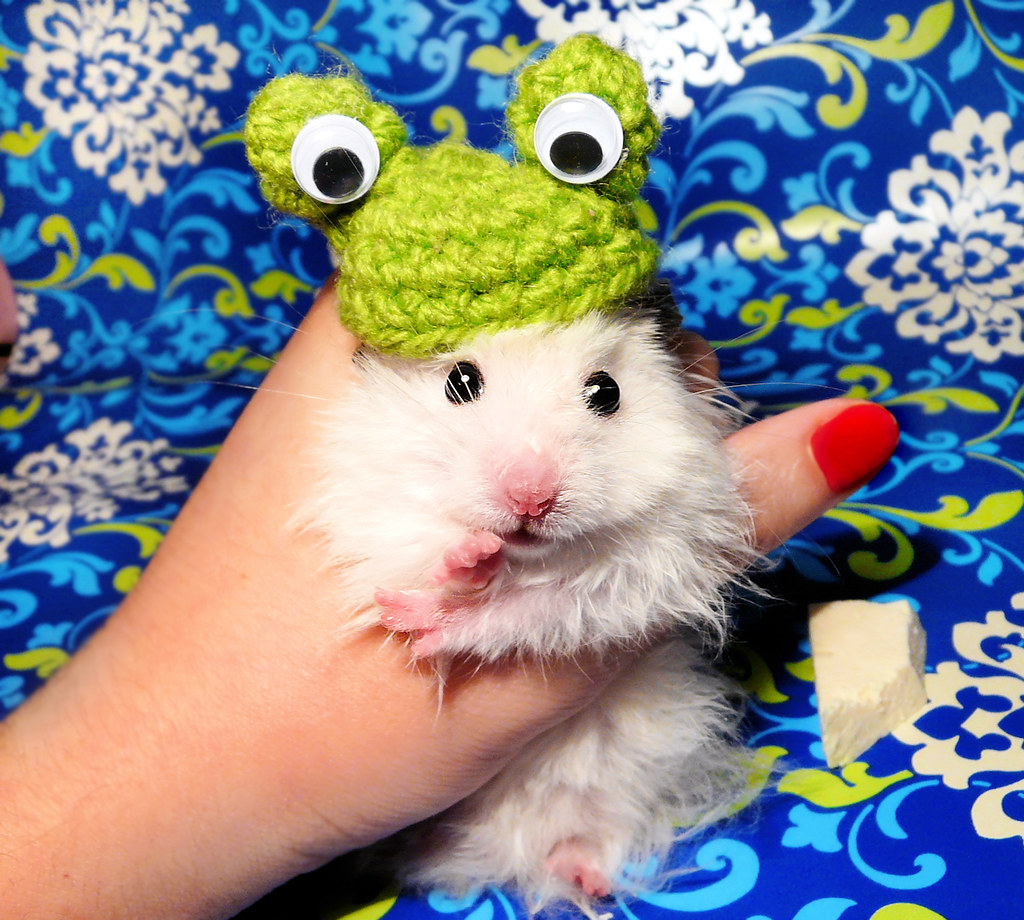 Dress up your pet day - All Rights Reserved