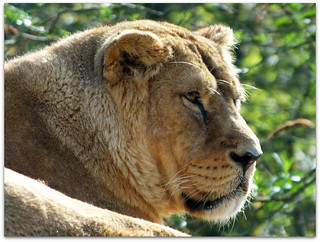 Keeping an eye on everyone! -  Cotswold Wildlife Park