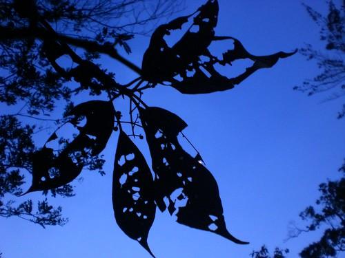 Folhagem contra o céu azul by Ana Dec