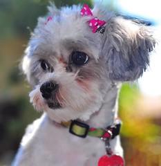 r. Rosie our Dog