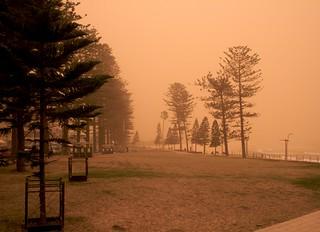 Imagen de Dee Why Beach cerca de Dee Why. sydney australia places newsouthwales deewhy deewhybeach canonefs1855mmf3556 canoneos400d