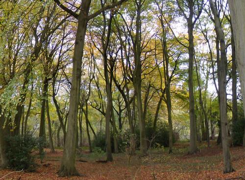 Woods above Amersham