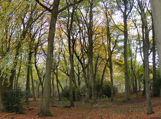 Woods above Amersham