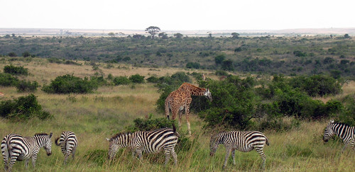 奈洛比國家公園,teakwood攝影。
