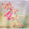 Pink Bellflowers Textured
