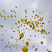 Balloon Race by Cathy G