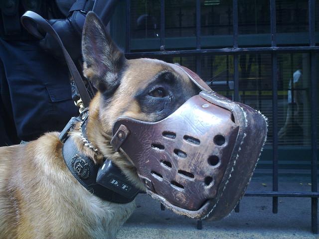 Dogtra Dog Collar Batteries