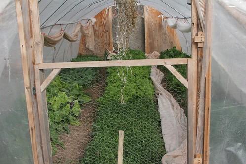 Hoop green houses