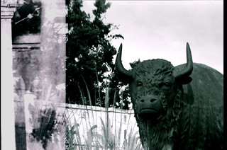 [ - bison, a study in bw -- no. 3 - ]
