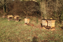 woodland, apiary, beehive, rural area,