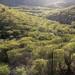 Desert vegetation - Desierto entre Moctezuma & Sahuaripa, Sonora, Mexico por Lon&Queta